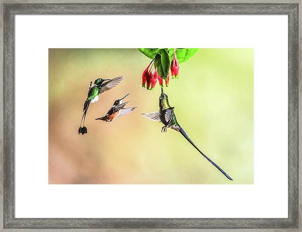 Taking Turns Framed Print