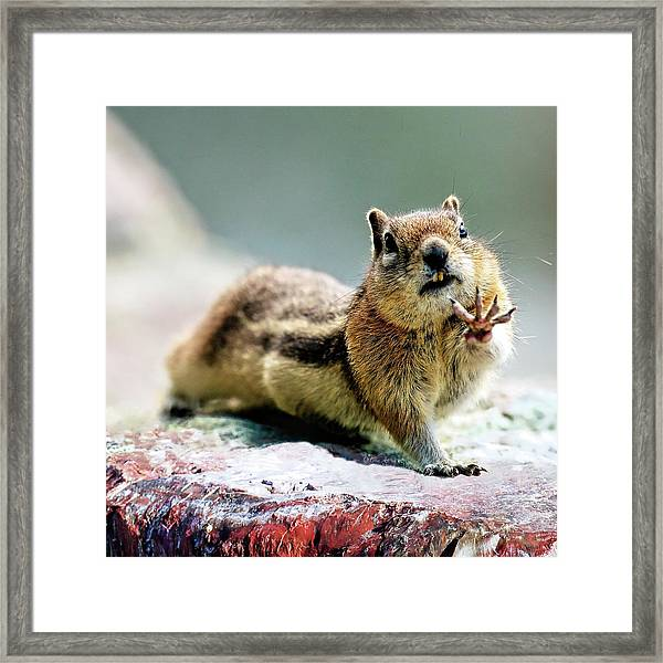 Talk To The Hand By Olena Art Framed Print