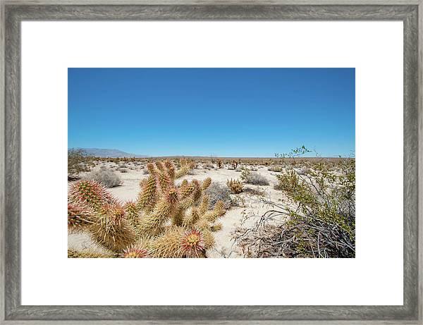 Teddy Bear Cactus Framed Print