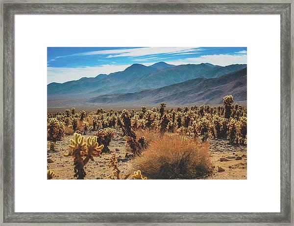 Teddy Bear Chollas At Joshua Tree National Park Framed Print