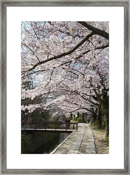 Tetsugakunomichi, Kyoto Prefecture Framed Print by Daj