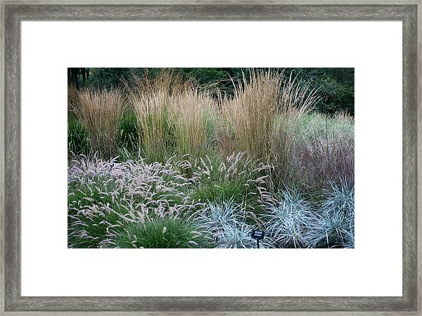 Textures In Grasses Framed Print
