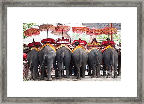 Thai Elephant Framed Print