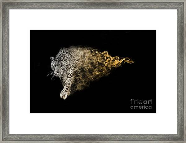 The African Leopard Is One Of The Big Framed Print
