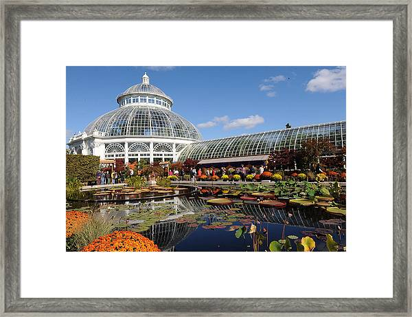 The Art Of The Japanese Chrysanthemum Framed Print