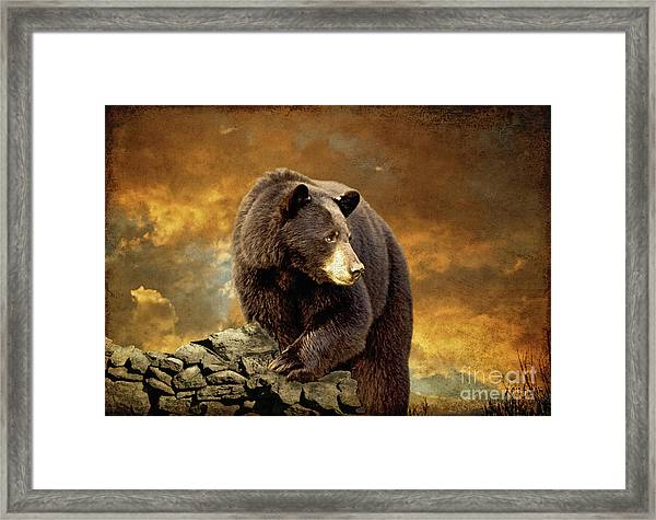 Framed Print featuring the photograph The Bear Went Over The Mountain by Lois Bryan