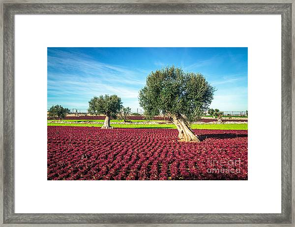 The Beautiful And Colorful Landscapes Framed Print by Sabino Parente