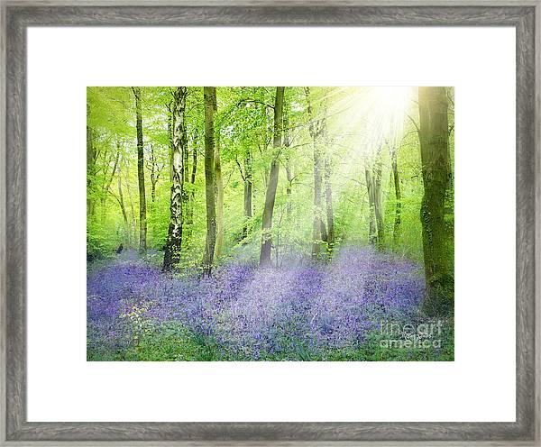 The Bluebell Woods Framed Print