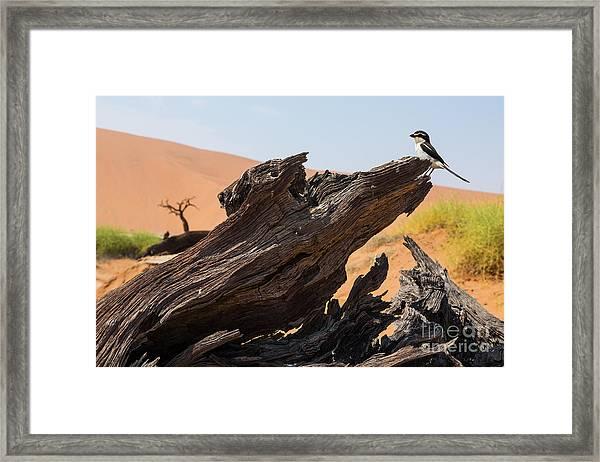 The Desert Landscape Framed Print