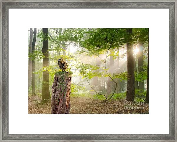 The Enchanted Forrest Framed Print
