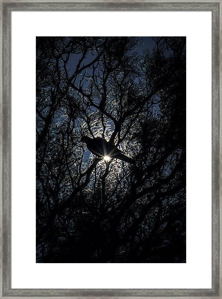 The Enlightened Dove Framed Print