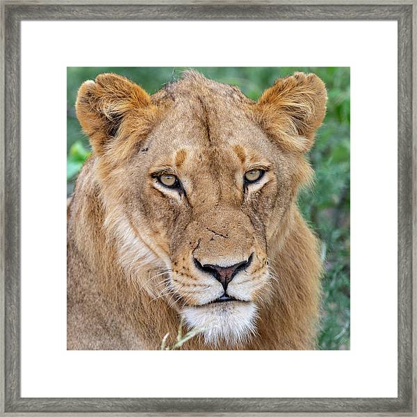 The Face Of Experience Framed Print