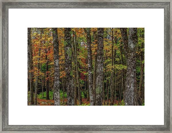 The Fall Woods Framed Print