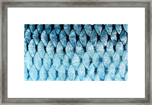 The Fish Scale Close Up Framed Print