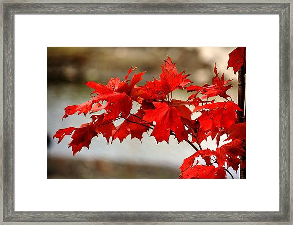 The Future. Framed Print