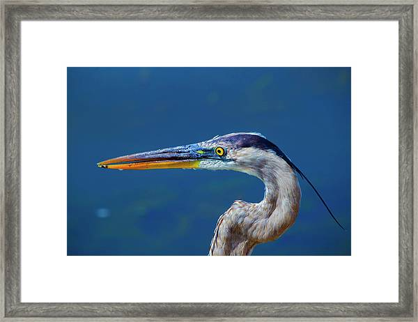 The Headshot Framed Print