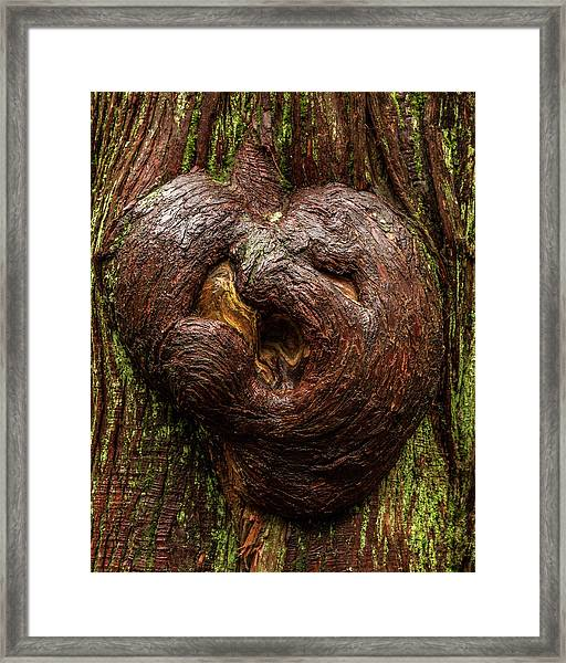 The Heart Of The Forest Framed Print