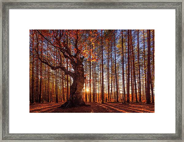 The King Of The Trees Framed Print