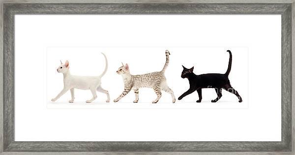 The Kits Parade - Three Framed Print
