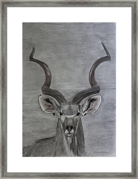 The Kudu Framed Print