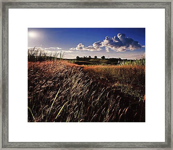 The Last Grassy Field, Trinidad Framed Print