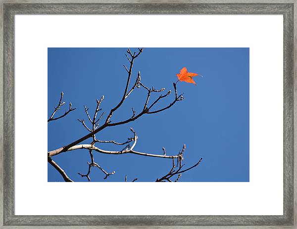 The Last Leaf During Fall Framed Print by By Ken Ilio