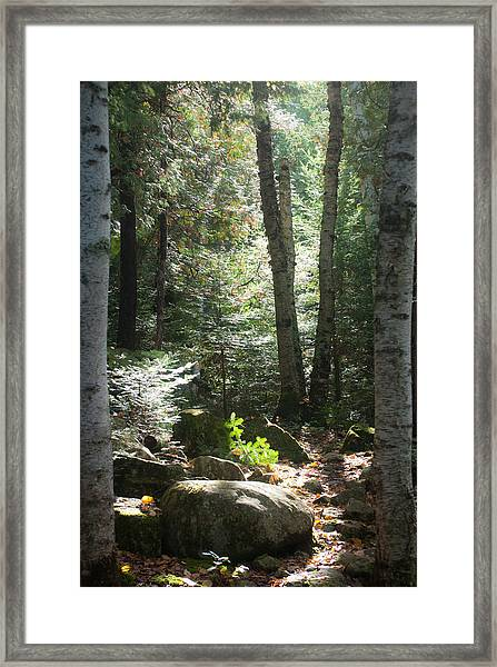 The Living Forest Framed Print