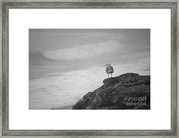 Framed Print featuring the photograph The Lone Gull by Jeni Gray