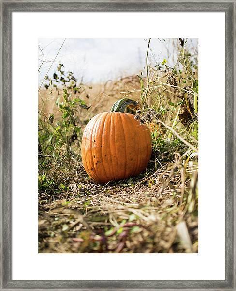 The Lone Pumpkin Framed Print
