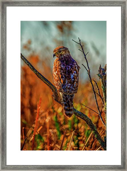 The Look Framed Print