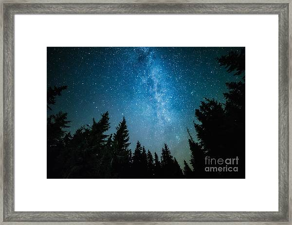 The Milky Way Rises Over The Pine Trees Framed Print