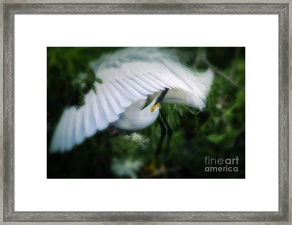 The Nature Of Beauty Framed Print