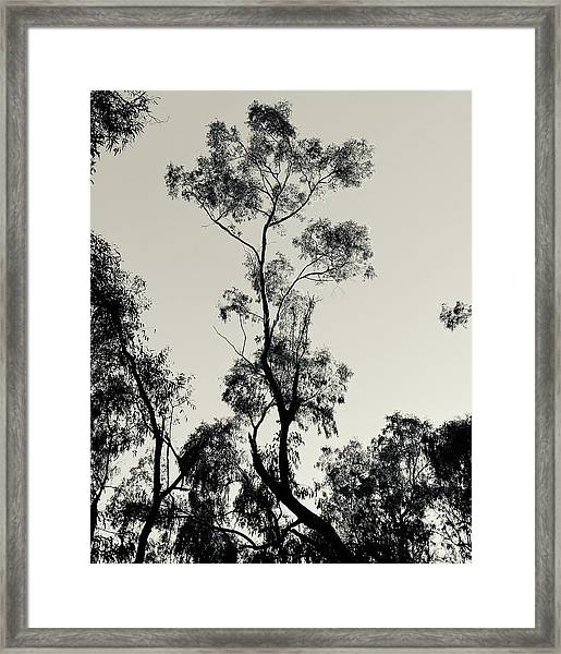 The Other One Was Getting Lonely Framed Print