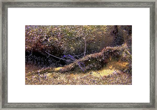 The Pederson Corkscrew Framed Print