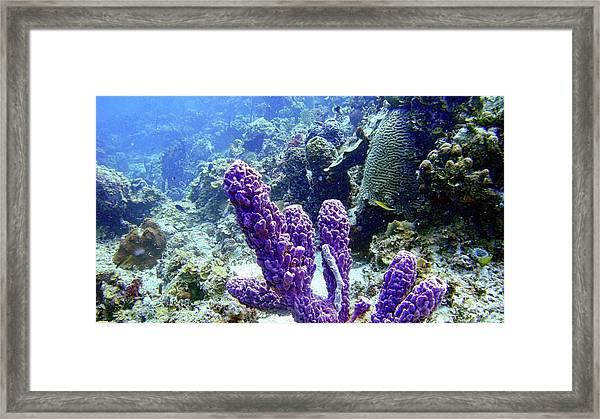 The Purple Sponge Framed Print