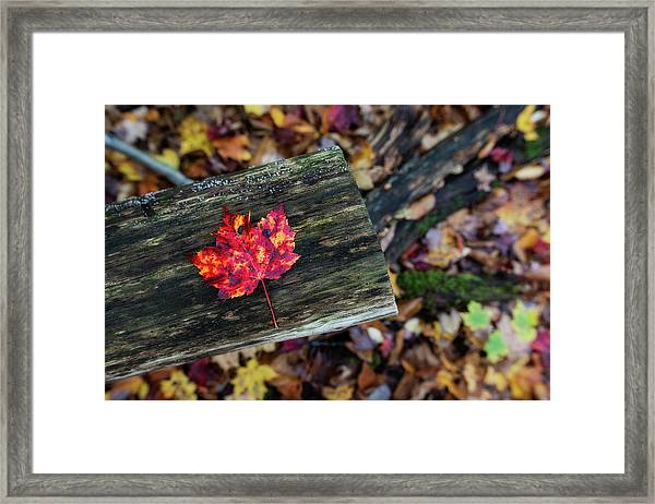 The Reason They Call It Fall Framed Print