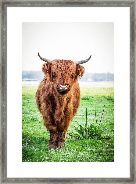 Framed Print featuring the photograph The Scottish Highlander by Anjo Ten Kate