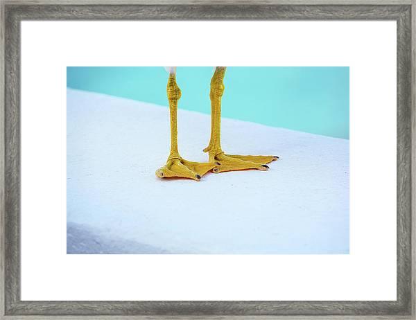 The Seagull's Feet - Minimalism Framed Print