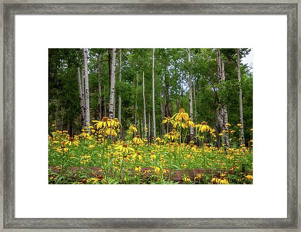 The Secret Garden Framed Print