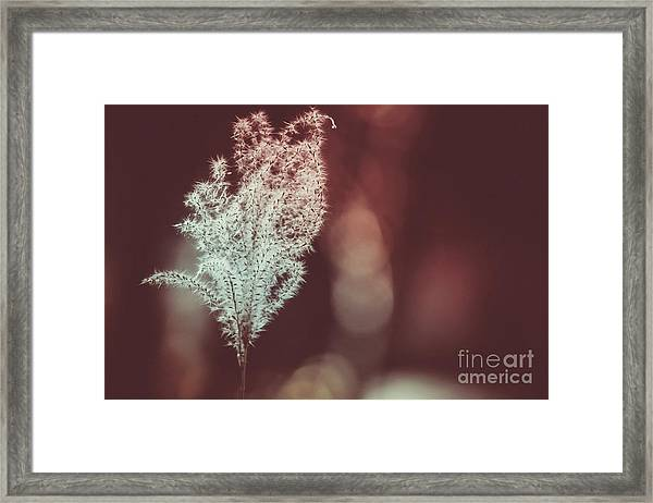 The Shine Framed Print