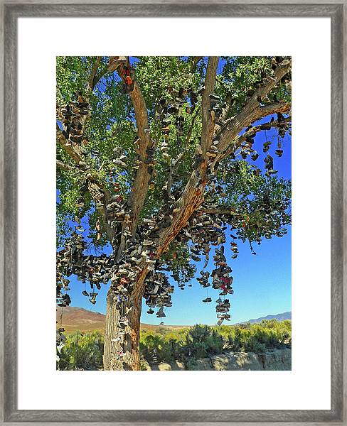 The Shoe Tree Framed Print
