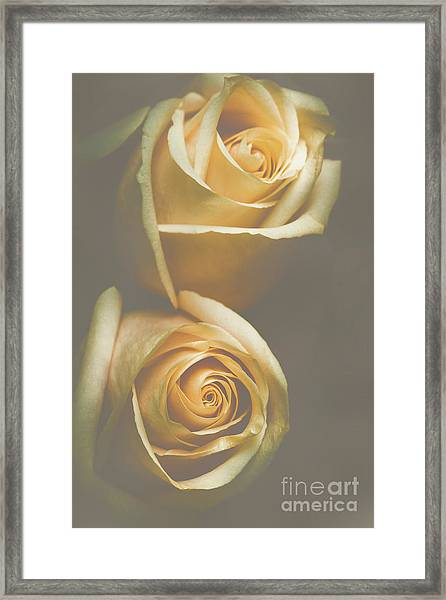 The Soft Shadows Framed Print
