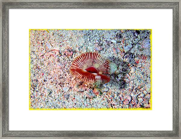 The Split-crown And The Rubble Framed Print