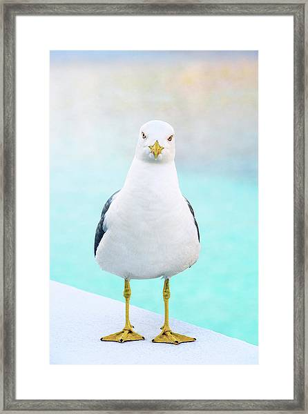 The Stare Of The Seagull Framed Print