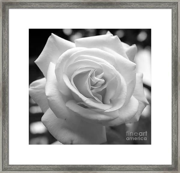 The Subtle Rose Framed Print