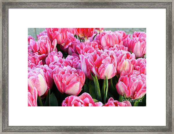 The Sweet Hello Framed Print