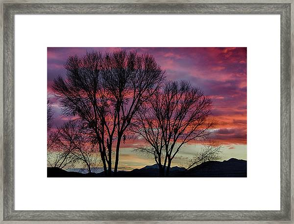 The Trees Know Sunset Framed Print