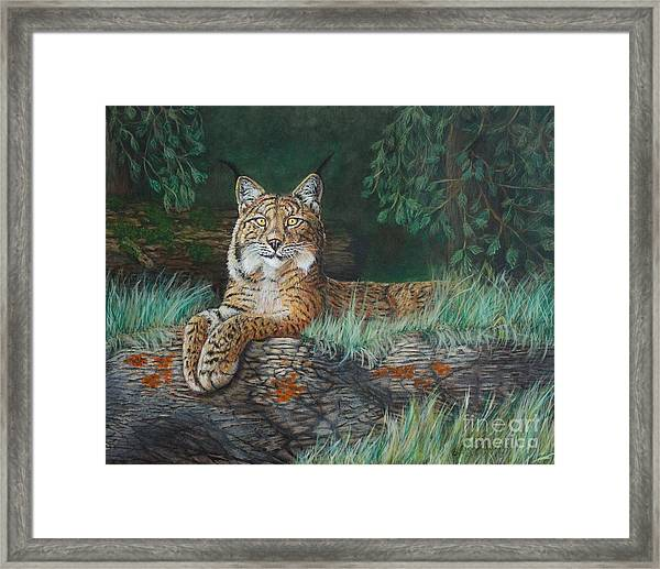 The Wild Cat  Framed Print
