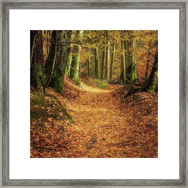 Framed Print featuring the photograph The Yellow Leaf Road by Elliott Coleman