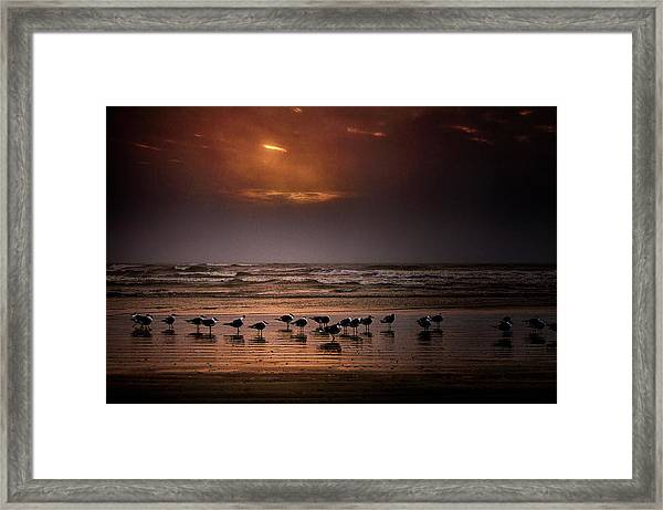Theres Gotta Be Food Around Here Framed Print